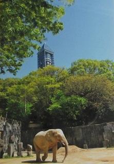 新緑の東山.jpg
